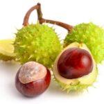 Alternative Medicinal Therapies for Varicose Veins